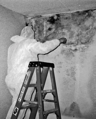 commercial mold remediation and water cleanup in the midwest