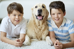 Wisconsin Pet Trusts